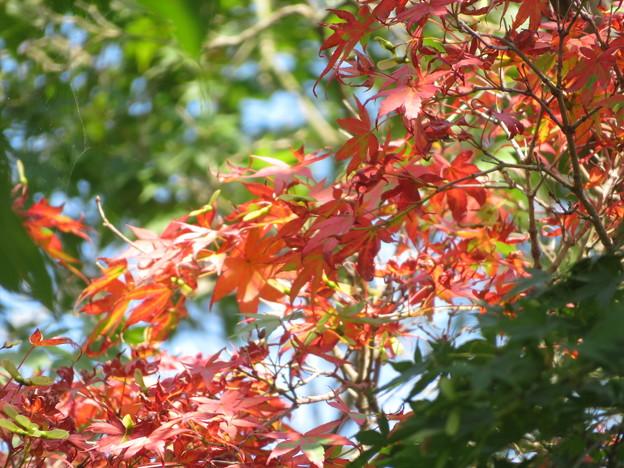 夏なのに紅葉