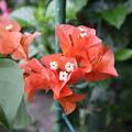 オレンジ色の花だわ