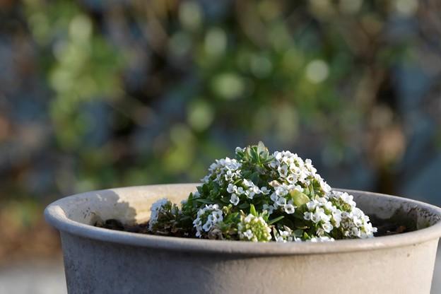 Photos: 小花の集まり