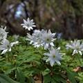 Photos: 白い花が咲いてた~~♪
