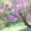 Photos: 春の空気