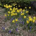 Photos: 小さな花たちの春