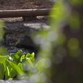 Photos: 水芭蕉をのぞく