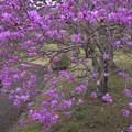 Photos: 踊りだす花たち