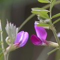 お花の世界のご挨拶