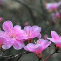 Photos: 春を告げる色
