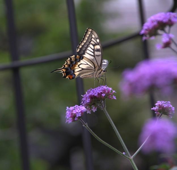 Photos: 蝶の遊ぶところ
