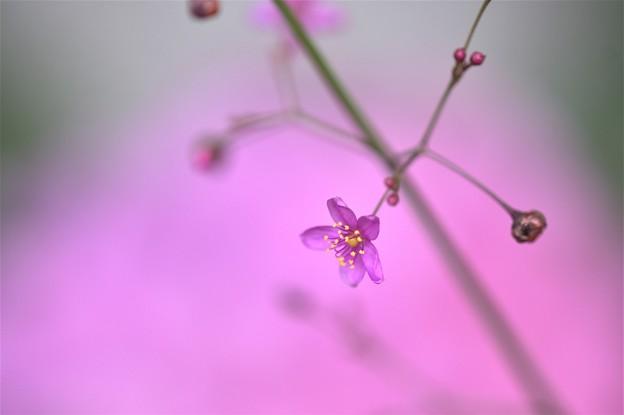 Photos: 星の滴