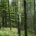 Photos: 森の仙人