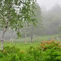 Photos: レンゲツツジの咲く頃は・・