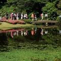 Photos: コウホネ咲く池