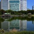 Photos: 江戸の池に東京のビル