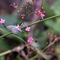 Photos: 三時のお花
