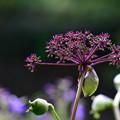 Photos: 意表をつく花の色