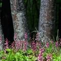 Photos: 小さな花の群生