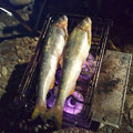 Photos: 鮎の塩焼き