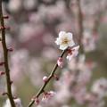 Photos: 佐布里梅02