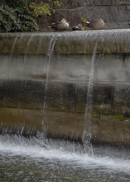 Photos: 流水に憩う
