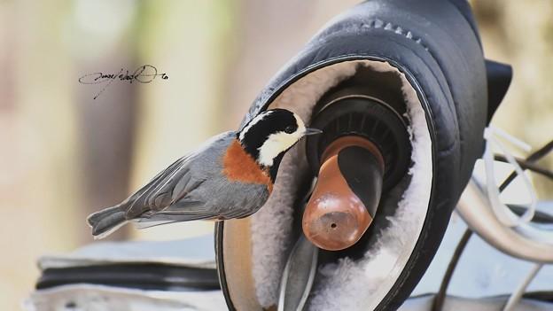 Photos: 巣にしようかな!?