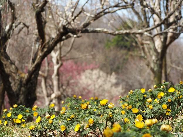Photos: 春、一歩ずつ