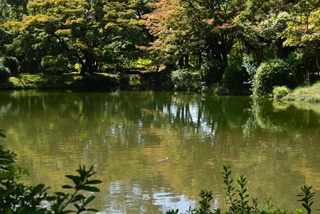 池を囲む色づき