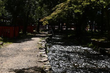 奈良の小川の燦めき