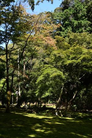 色づく渉渓園