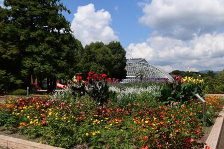まだ夏空の植物園