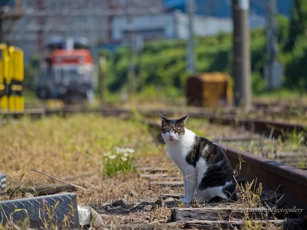 浜川崎の猫