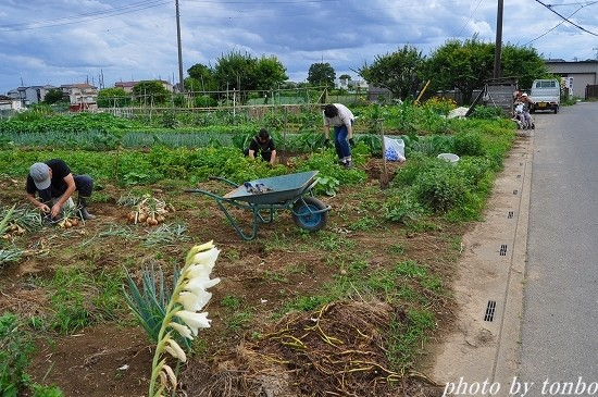 2021.06.20 野菜収穫-01