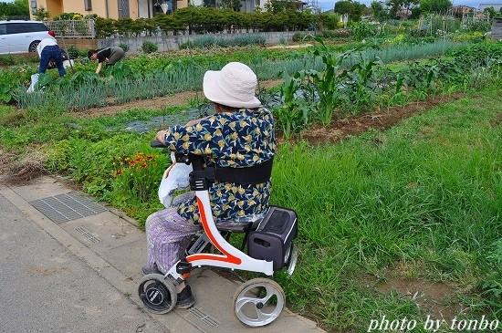 2021.06.20 野菜収穫-02