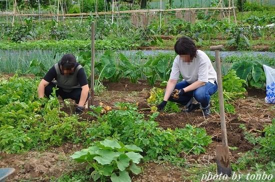 2021.06.20 野菜収穫-03