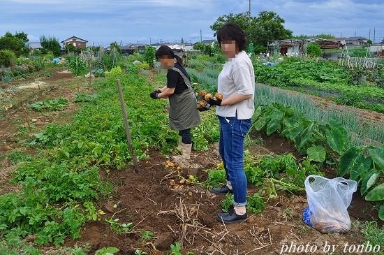 2021.06.20 野菜収穫-04
