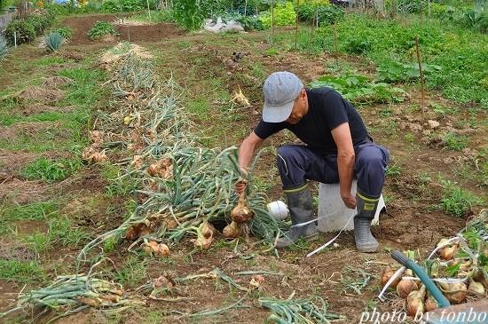 2021.06.20 野菜収穫-05