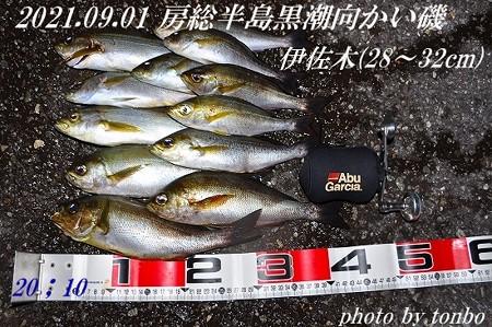 2021.09.01 南房磯釣果-01 (28~32cm)