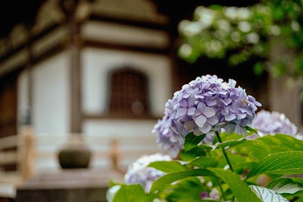 16長尾山妙楽寺【薬師堂の眺め】2銀塩NLP