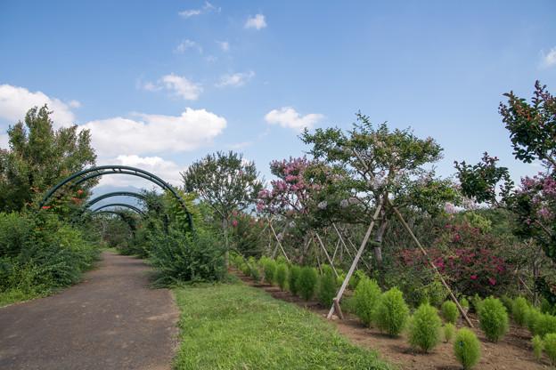 28花菜ガーデン【枝百景の丘】