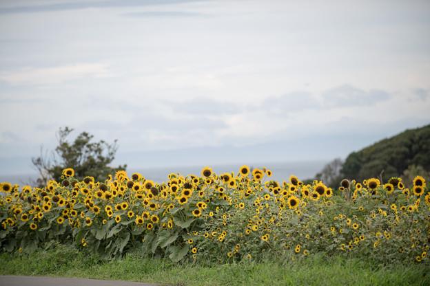 17ソレイユの丘【入口花壇の近景】5