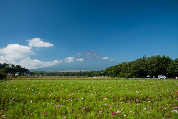 04富士五湖巡り【花の都公園:コスモスと富士】