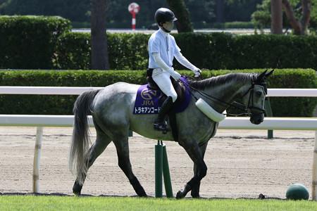新潟競馬場 誘導馬・トラキアンコード_3(21/07/31)